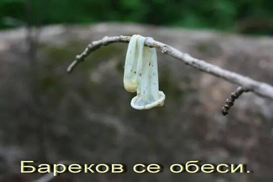 barekow-se-obesi